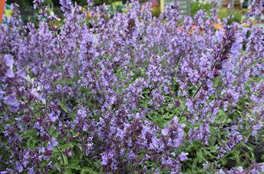 favourite-perennials-and-shrubs